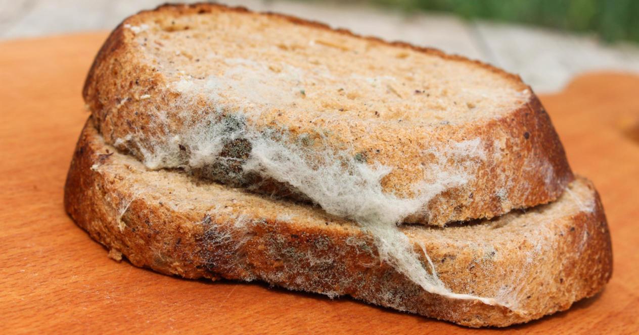 Что будет если есть хлеб с плесенью